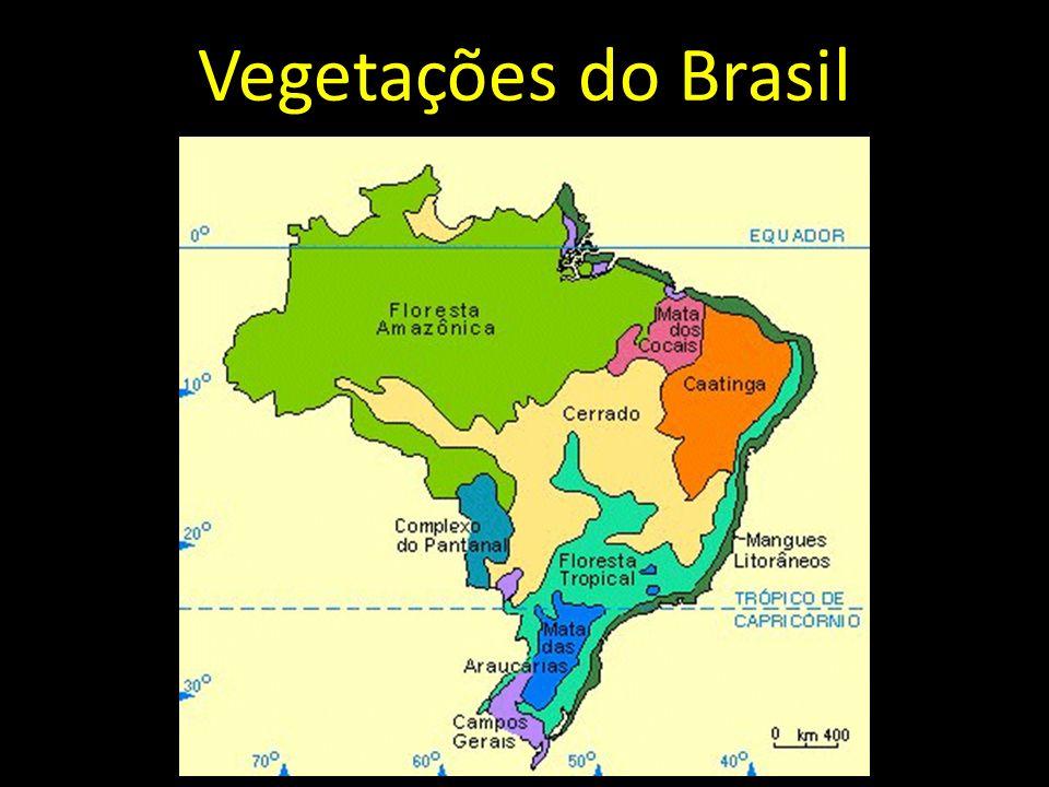 Fauna do Mangue
