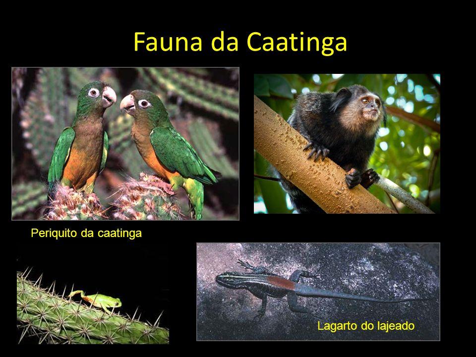 Fauna da Caatinga Periquito da caatinga Lagarto do lajeado