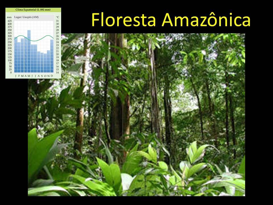 Mata de araucárias: espécie predominante pinheiro-do-parana (gimnosperma), canelas, erva- mate, imbuia.