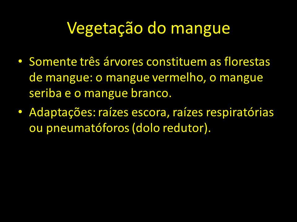 Vegetação do mangue Somente três árvores constituem as florestas de mangue: o mangue vermelho, o mangue seriba e o mangue branco. Adaptações: raízes e