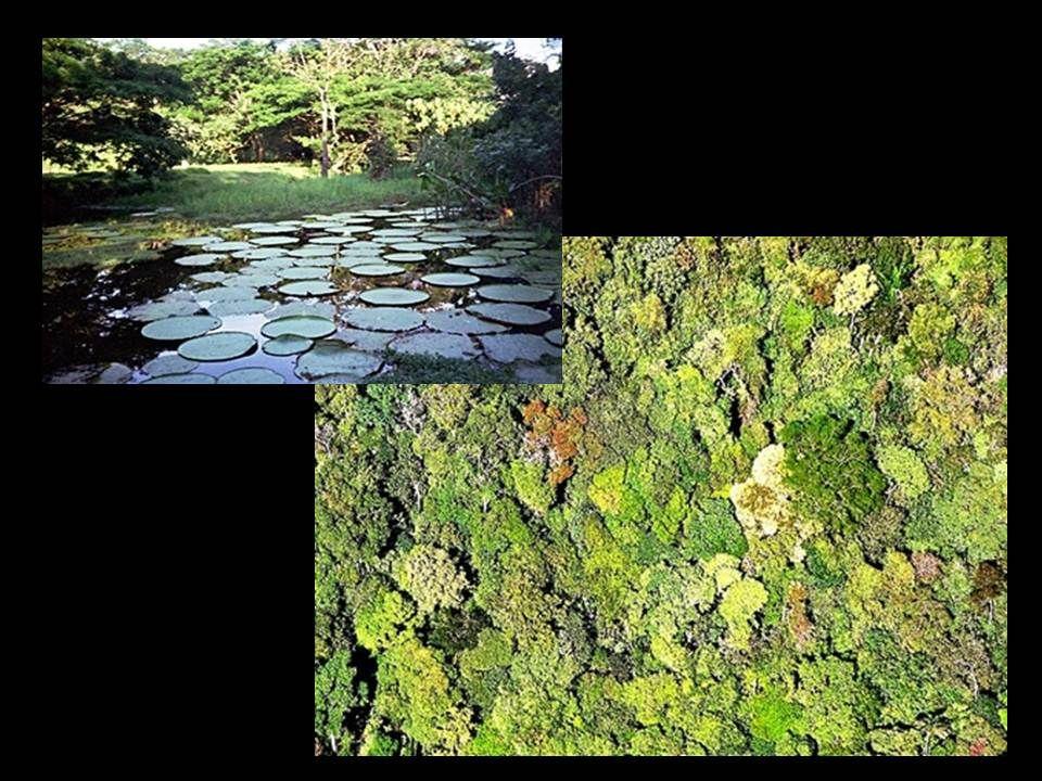 Ecótono é a área de transição entre duas biocenoses, onde há uma quantidade considerável de espécies próprias da área e outra quantidade referente às áreas fronteiriças É a área de transição entre duas biocenoses, onde há uma quantidade considerável de espécies próprias.