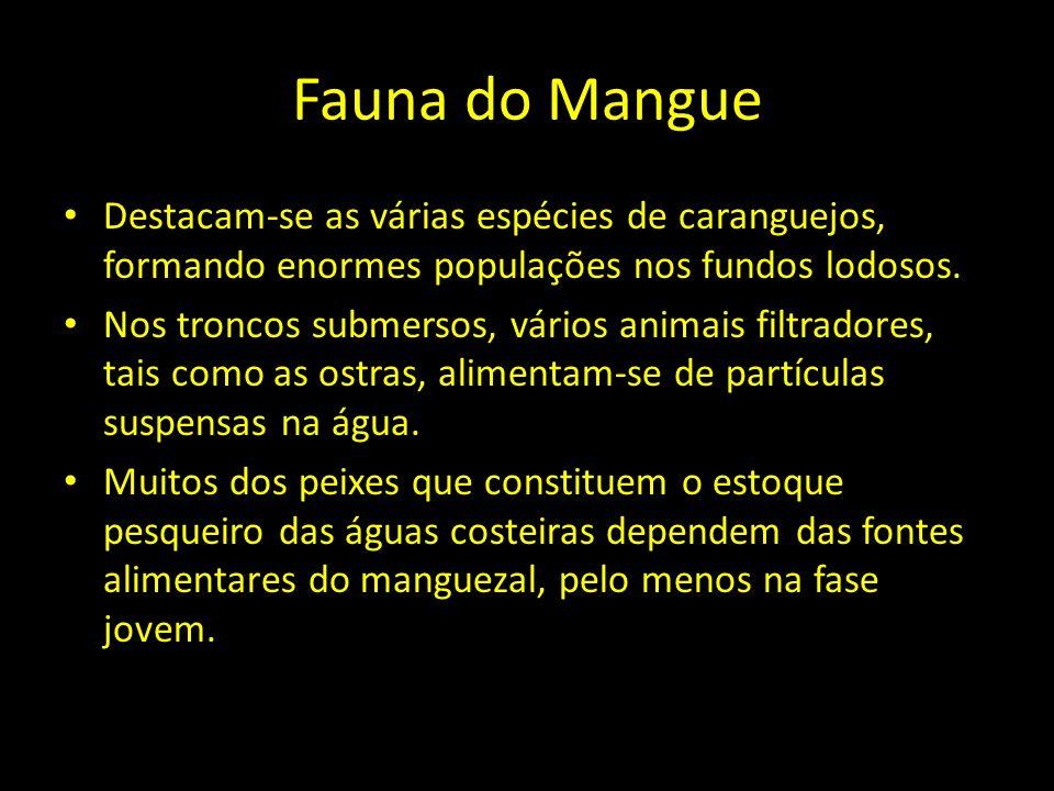 Fauna do Mangue Destacam-se as várias espécies de caranguejos, formando enormes populações nos fundos lodosos. Nos troncos submersos, vários animais f