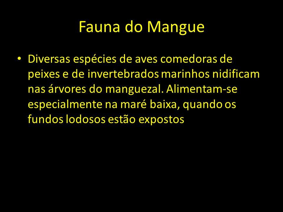 Fauna do Mangue Diversas espécies de aves comedoras de peixes e de invertebrados marinhos nidificam nas árvores do manguezal. Alimentam-se especialmen