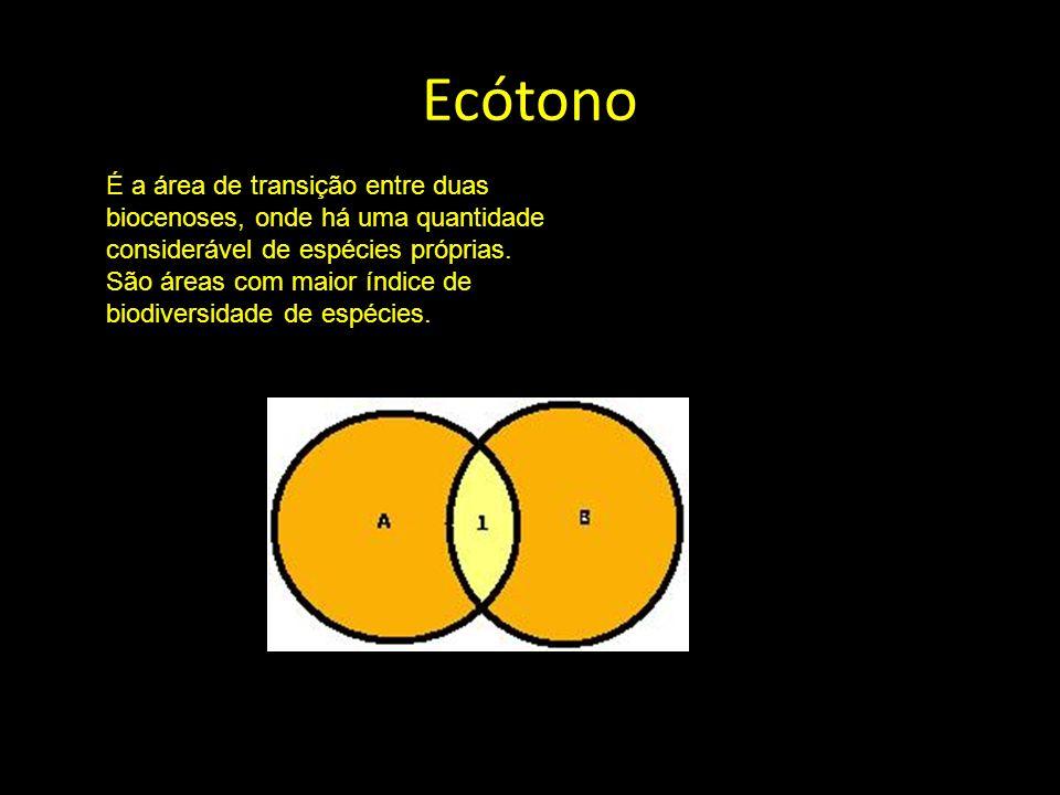 Ecótono é a área de transição entre duas biocenoses, onde há uma quantidade considerável de espécies próprias da área e outra quantidade referente às