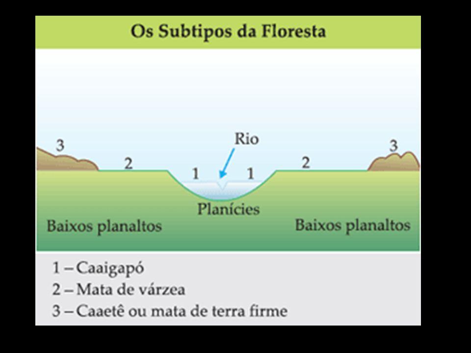 Vegetação da Mata Atlântica Por se tratar de uma floresta tropical apresenta as mesmas características adaptativas da floresta Amazônica porém formada por espécies vegetais distintas.