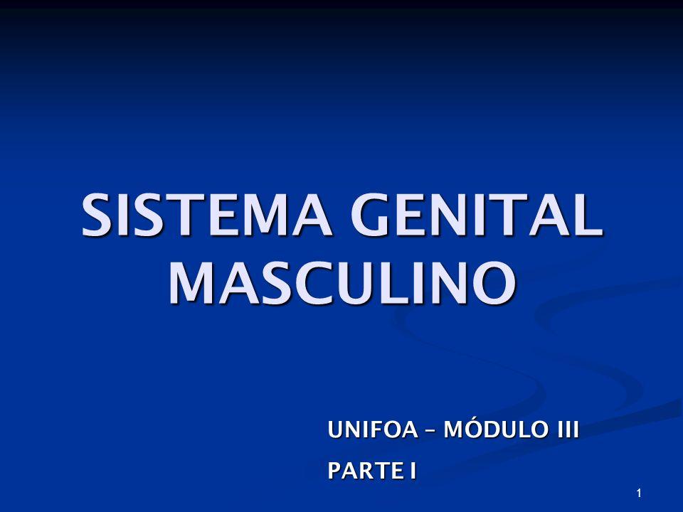 1 SISTEMA GENITAL MASCULINO UNIFOA – MÓDULO III PARTE I