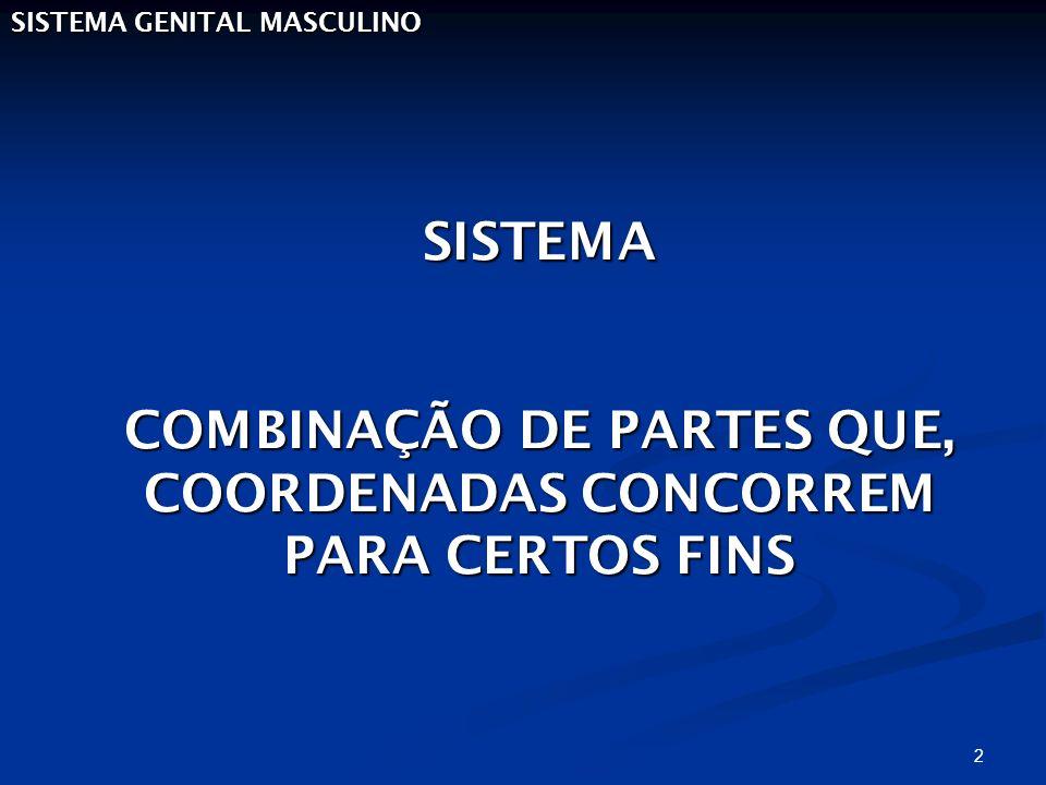 2 SISTEMA GENITAL MASCULINO SISTEMA COMBINAÇÃO DE PARTES QUE, COORDENADAS CONCORREM PARA CERTOS FINS