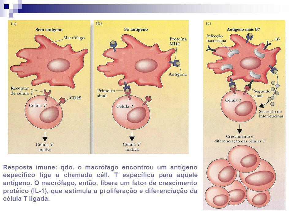 Resposta imune: qdo. o macrófago encontrou um antígeno específico liga a chamada céll. T específica para aquele antígeno. O macrófago, então, libera u