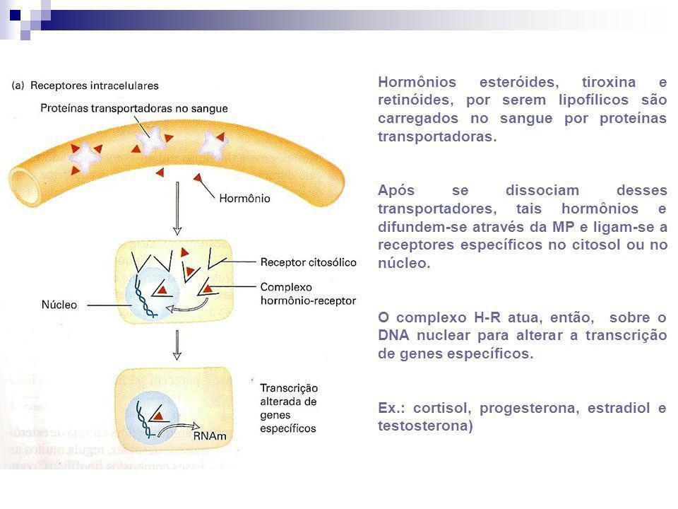 Hormônios esteróides, tiroxina e retinóides, por serem lipofílicos são carregados no sangue por proteínas transportadoras. Após se dissociam desses tr