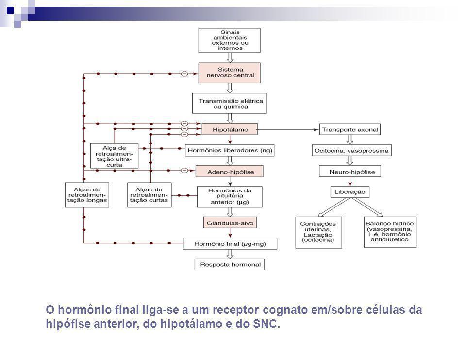 O hormônio final liga-se a um receptor cognato em/sobre células da hipófise anterior, do hipotálamo e do SNC.