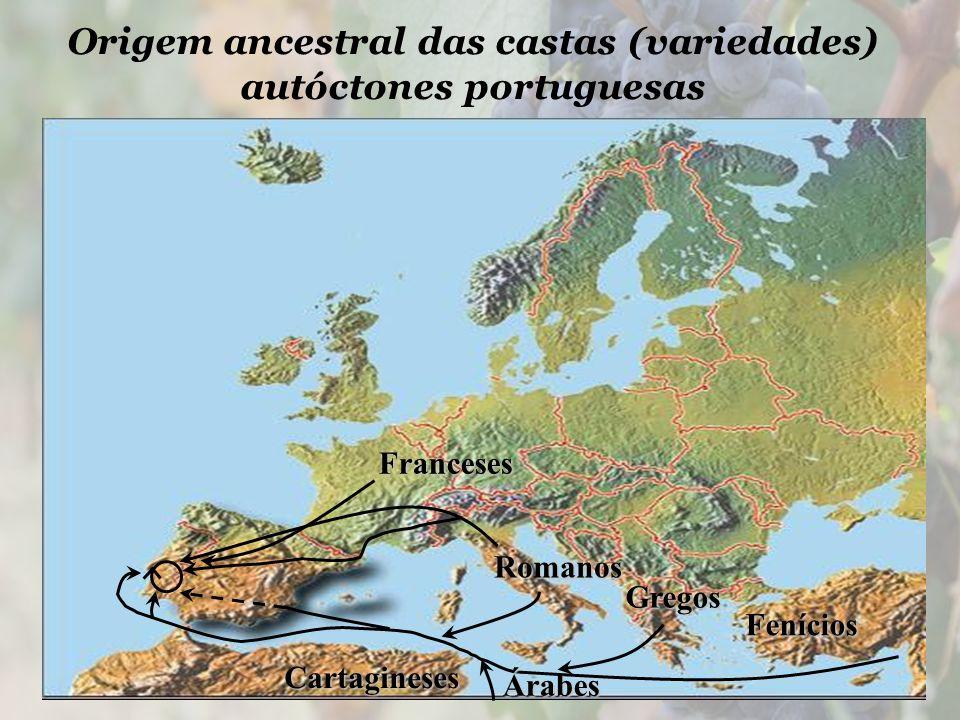 Origem ancestral das castas (variedades) autóctones portuguesas Fenícios Gregos Cartagineses Romanos Franceses Árabes