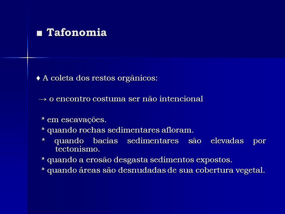 Tafonomia Tafonomia A coleta dos restos orgânicos: A coleta dos restos orgânicos: o encontro costuma ser não intencional o encontro costuma ser não in