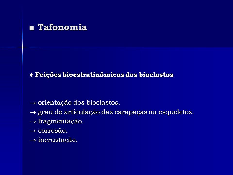 Tafonomia Tafonomia Feições bioestratinômicas dos bioclastos Feições bioestratinômicas dos bioclastos orientação dos bioclastos. orientação dos biocla