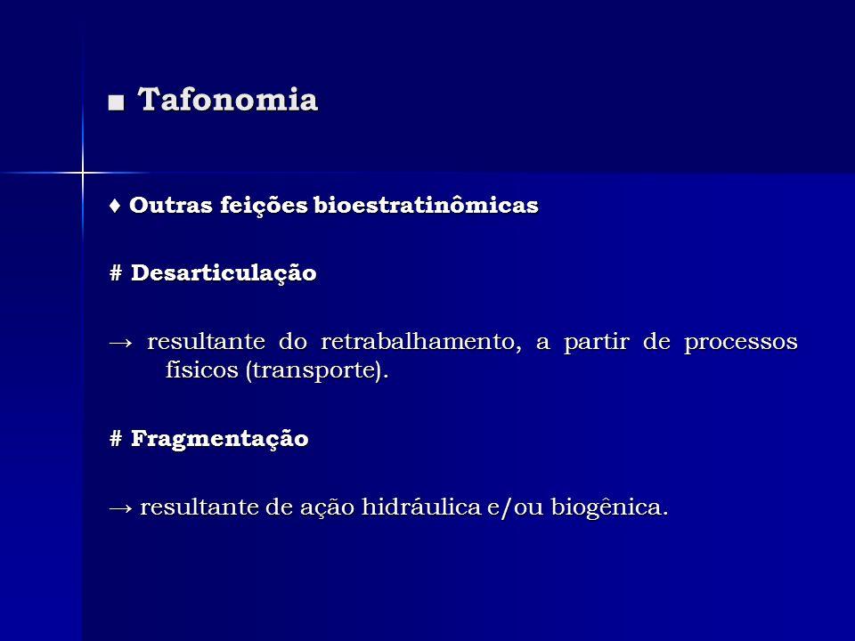 Tafonomia Tafonomia Outras feições bioestratinômicas Outras feições bioestratinômicas # Desarticulação resultante do retrabalhamento, a partir de proc