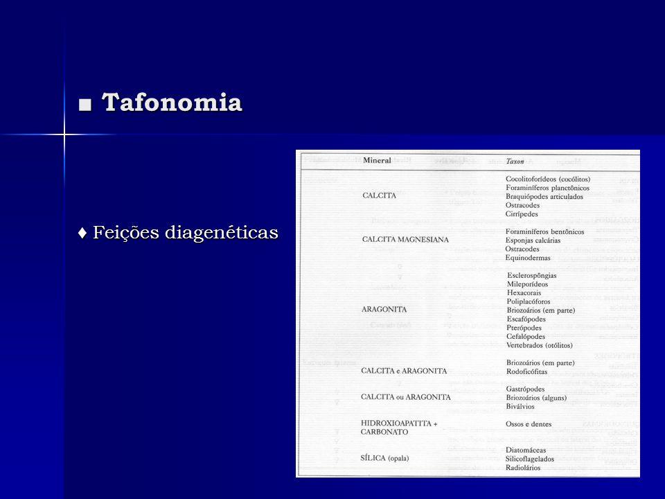 Tafonomia Tafonomia Feições diagenéticas Feições diagenéticas