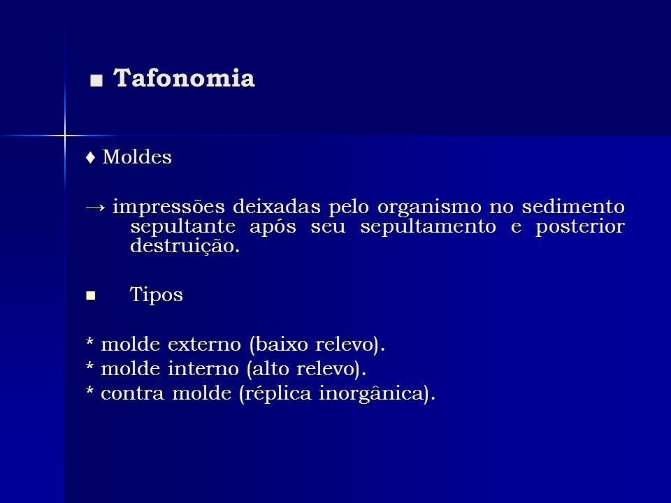 Tafonomia Tafonomia Moldes Moldes impressões deixadas pelo organismo no sedimento sepultante após seu sepultamento e posterior destruição. impressões