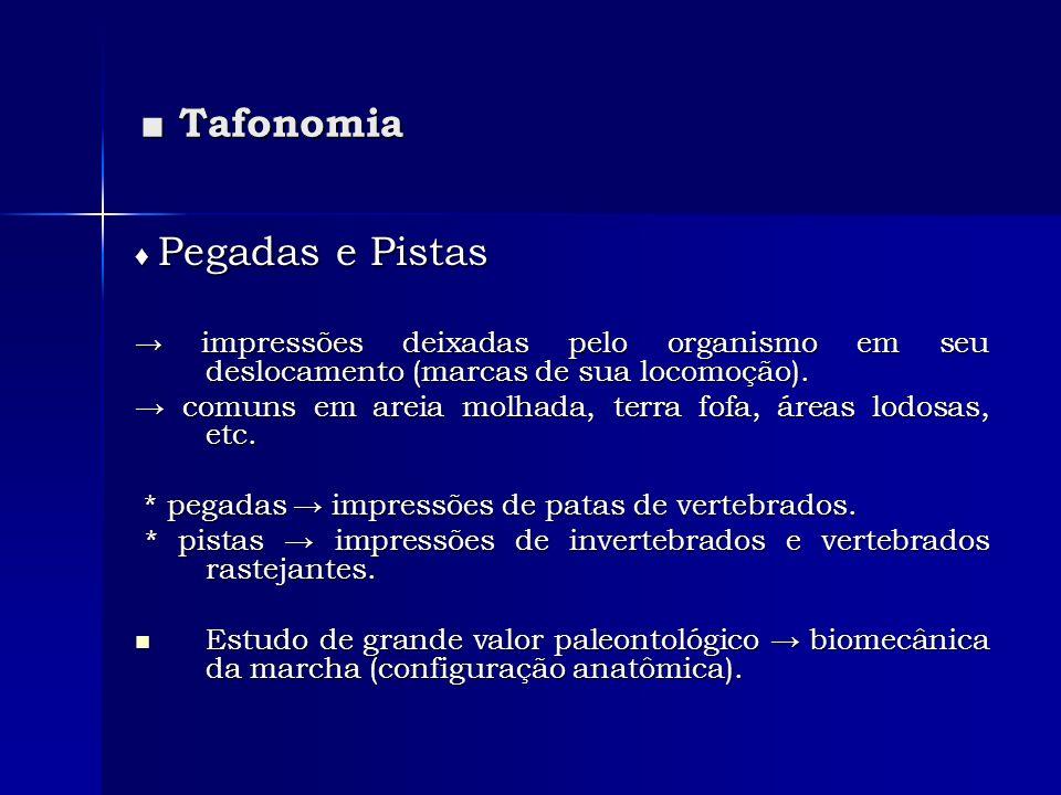 Tafonomia Tafonomia Pegadas e Pistas Pegadas e Pistas impressões deixadas pelo organismo em seu deslocamento (marcas de sua locomoção). impressões dei