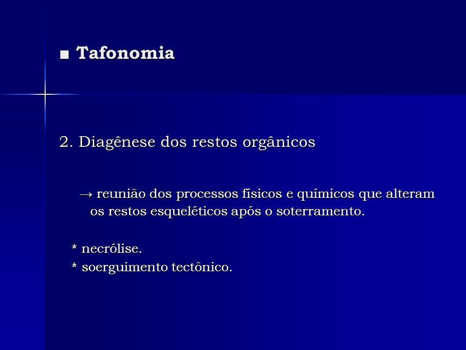 Tafonomia Tafonomia 2. Diagênese dos restos orgânicos reunião dos processos físicos e químicos que alteram os restos esqueléticos após o soterramento.