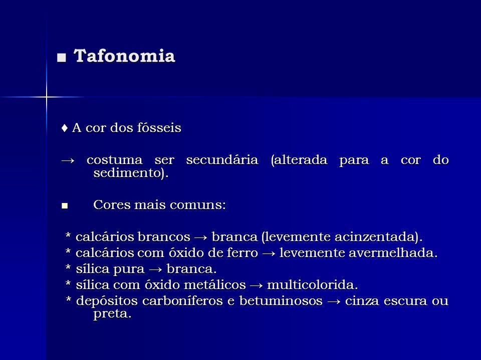 Tafonomia Tafonomia A cor dos fósseis A cor dos fósseis costuma ser secundária (alterada para a cor do sedimento). costuma ser secundária (alterada pa