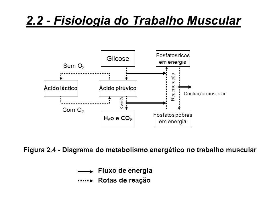 Ao nível dos músculos esta cobertura se fará: 3 diretamente, a partir da glicose ou do metabolismo dos ácidos graxos, segundo o tipo de músculo;. 3 in