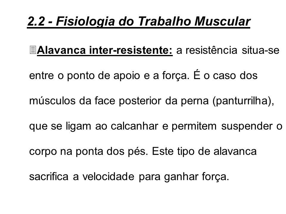 3Alavanca interfixa: o apoio situa-se entre a força e a resistência. Um exemplo típico é o tríceps. Este tipo de alavanca é o mais adequado para trans