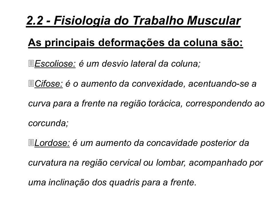 Figura 2.5 - A coluna vertebral 2.2 - Fisiologia do Trabalho Muscular