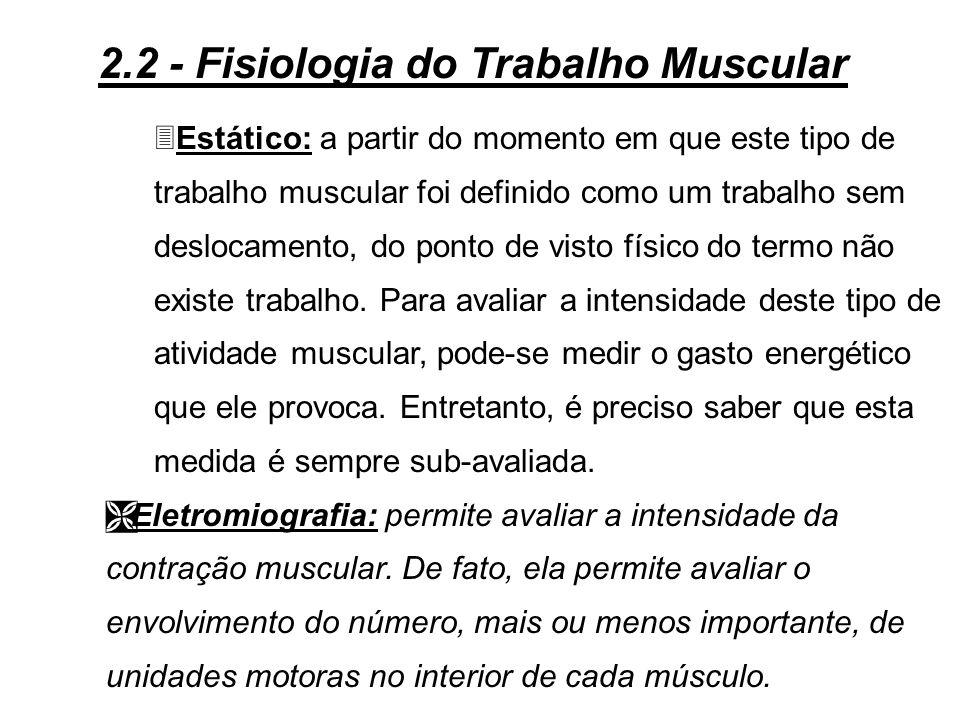 TÉCNICA DE ESTUDO - EXPLORAÇÃO FUNCIONAL DO MÚSCULO: Ê Medida da força muscular: é realizada com a utilização de um dinamômetro. Assim, pode-se medir