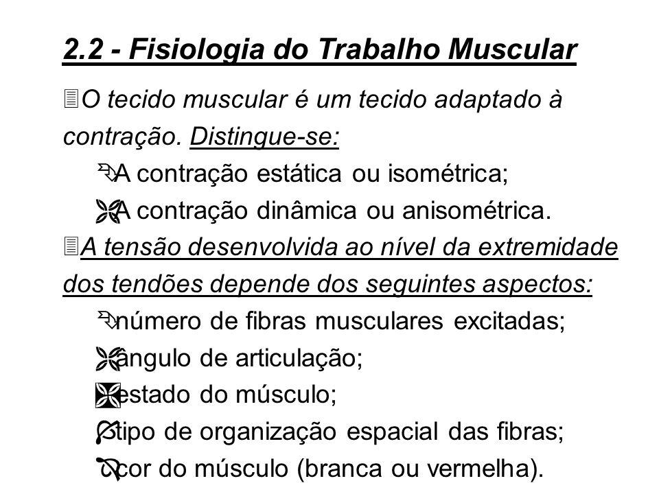 2.2 - Fisiologia do Trabalho Muscular 3A descrição do trabalho muscular permite evidenciar as relações existentes entre o ser humano e seu posto de tr