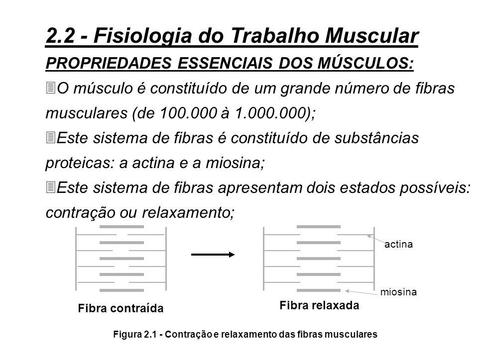3Toda atividade profissional necessita um trabalho muscular, mais ou menos importante, segundo as tarefas a serem realizadas. Este trabalho muscular é