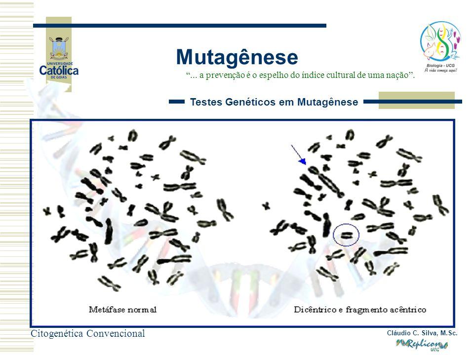 Cláudio C. Silva, M.Sc. Mutagênese... a prevenção é o espelho do índice cultural de uma nação. Testes Genéticos em Mutagênese Citogenética Convenciona