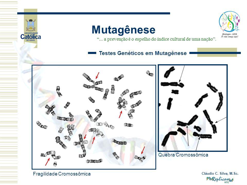 Cláudio C. Silva, M.Sc. Mutagênese... a prevenção é o espelho do índice cultural de uma nação. Testes Genéticos em Mutagênese Fragilidade Cromossômica
