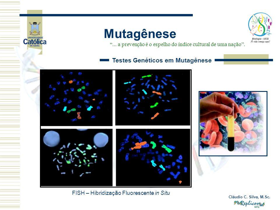 Cláudio C. Silva, M.Sc. Mutagênese... a prevenção é o espelho do índice cultural de uma nação. Testes Genéticos em Mutagênese FISH – Hibridização Fluo
