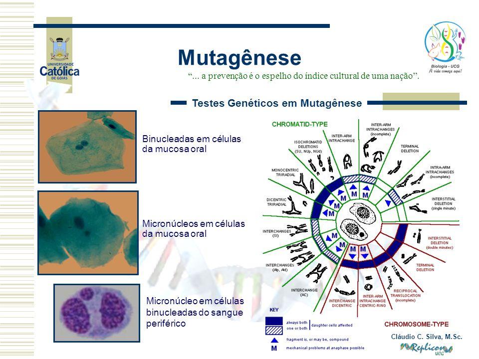 Cláudio C. Silva, M.Sc. Mutagênese... a prevenção é o espelho do índice cultural de uma nação. Testes Genéticos em Mutagênese Micronúcleo em células b
