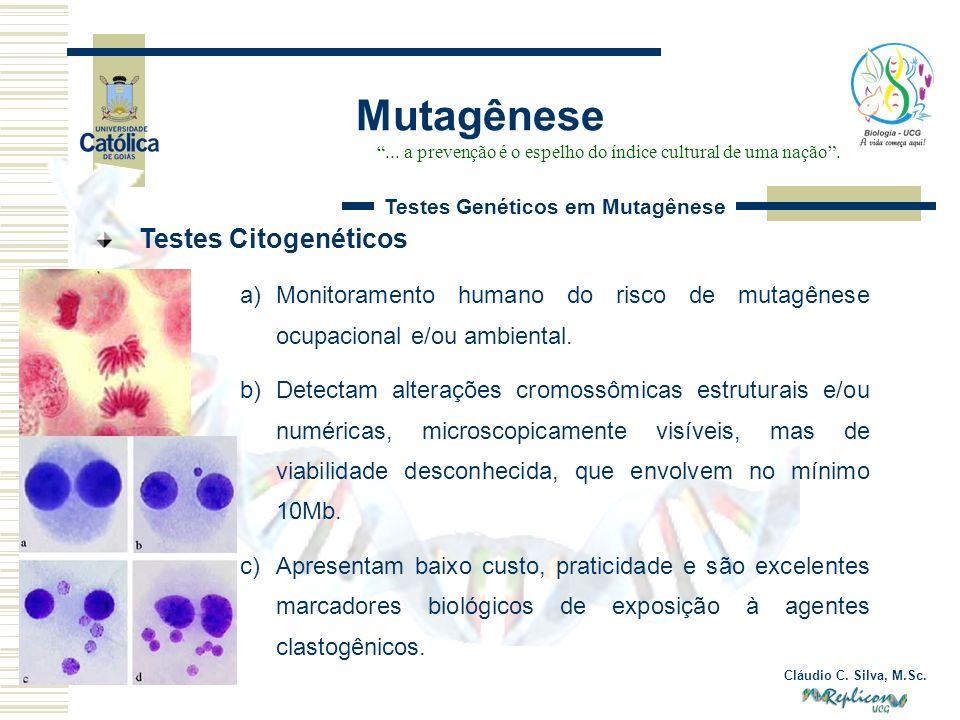 Cláudio C. Silva, M.Sc. Mutagênese... a prevenção é o espelho do índice cultural de uma nação. Testes Genéticos em Mutagênese Testes Citogenéticos a)M