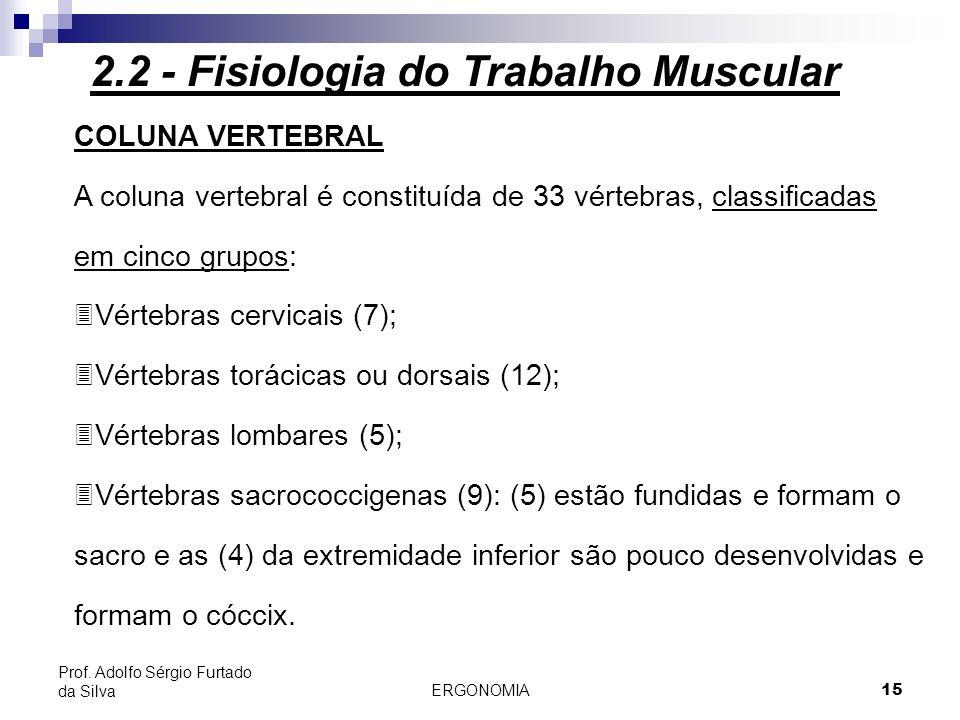 ERGONOMIA 15 Prof. Adolfo Sérgio Furtado da Silva COLUNA VERTEBRAL A coluna vertebral é constituída de 33 vértebras, classificadas em cinco grupos: 3V