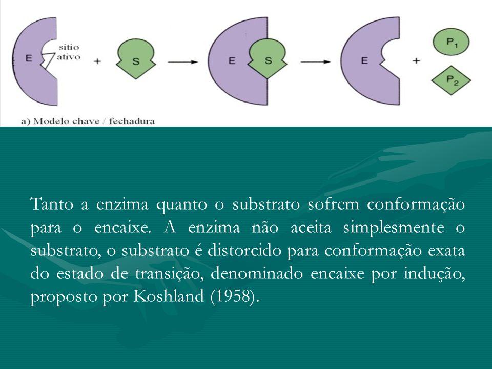 Tanto a enzima quanto o substrato sofrem conformação para o encaixe. A enzima não aceita simplesmente o substrato, o substrato é distorcido para confo