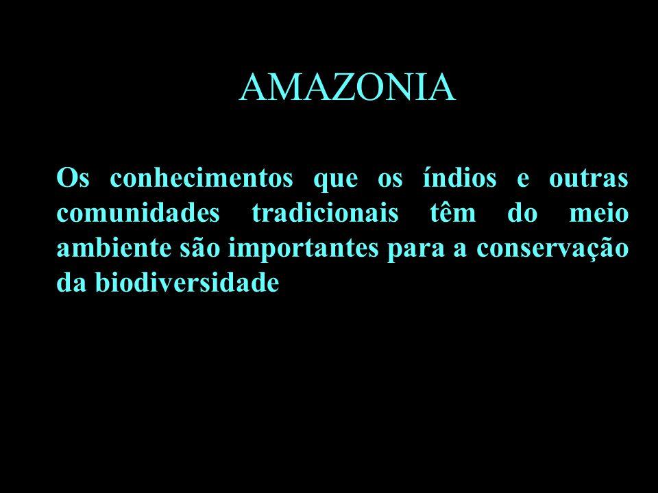 B AMAZONIA Os conhecimentos que os índios e outras comunidades tradicionais têm do meio ambiente são importantes para a conservação da biodiversidade