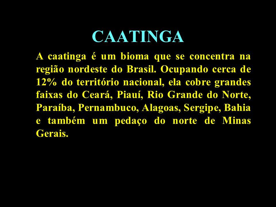 CAATINGA A caatinga é um bioma que se concentra na região nordeste do Brasil. Ocupando cerca de 12% do território nacional, ela cobre grandes faixas d