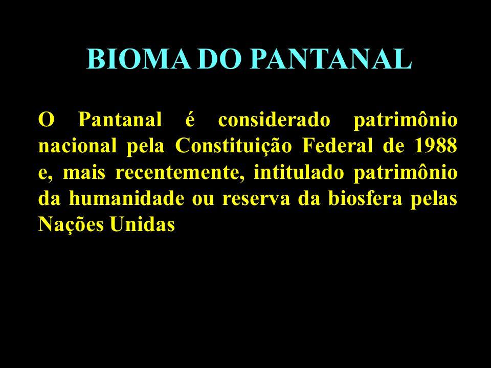 Divisão em 02 continentes BIOMA DO PANTANAL O Pantanal é considerado patrimônio nacional pela Constituição Federal de 1988 e, mais recentemente, intit