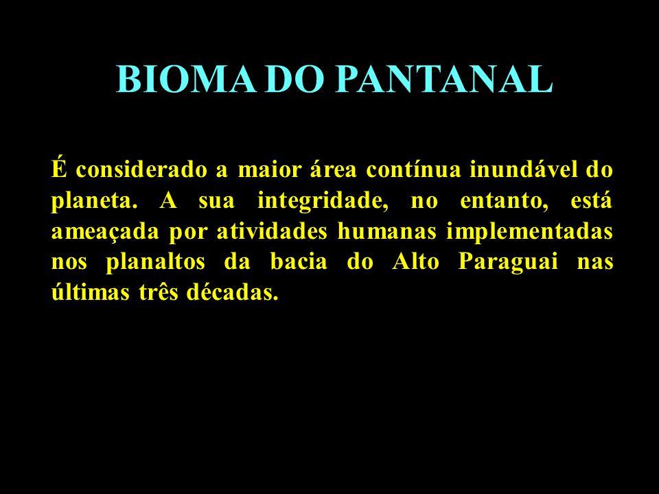 Divisão em 02 continentes BIOMA DO PANTANAL É considerado a maior área contínua inundável do planeta. A sua integridade, no entanto, está ameaçada por