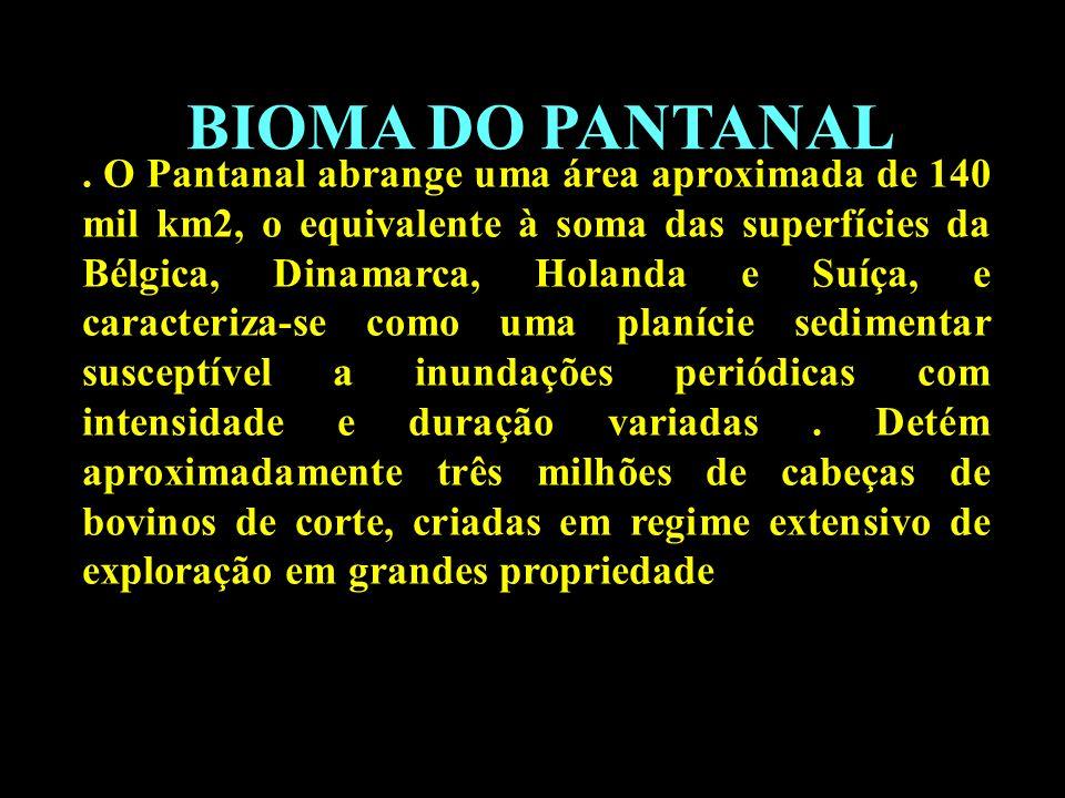 Divisão em 02 continentes BIOMA DO PANTANAL. O Pantanal abrange uma área aproximada de 140 mil km2, o equivalente à soma das superfícies da Bélgica, D