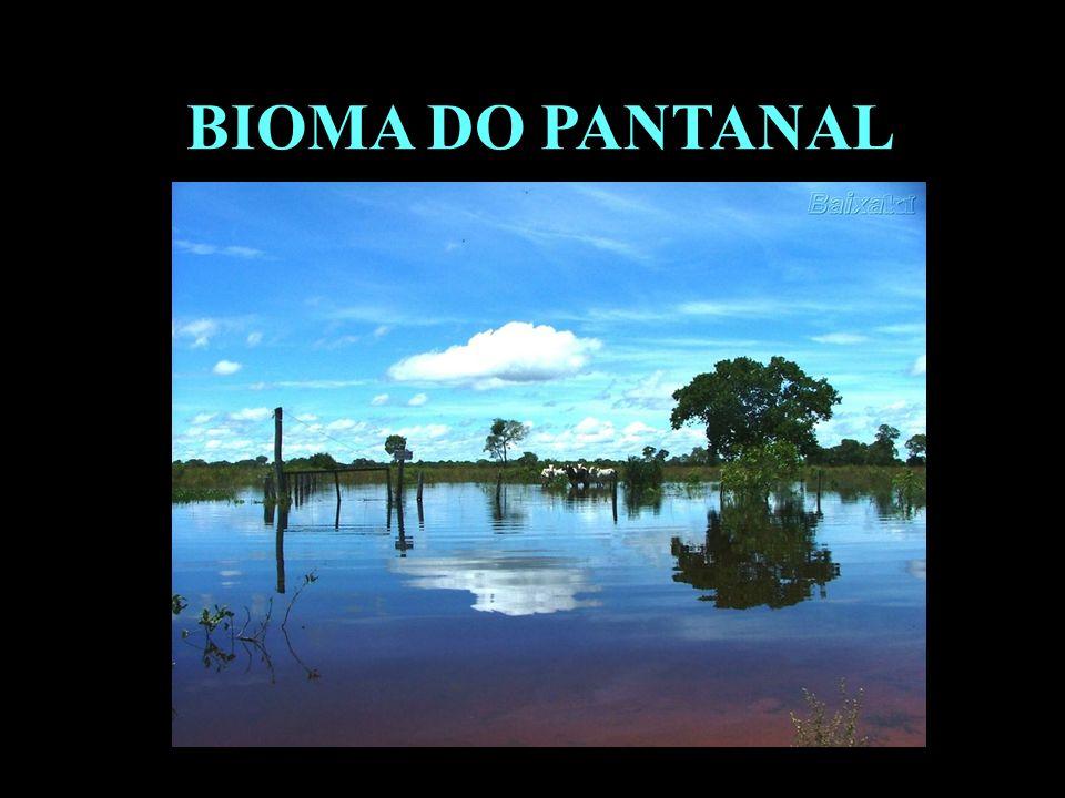 Divisão em 02 continentes BIOMA DO PANTANAL
