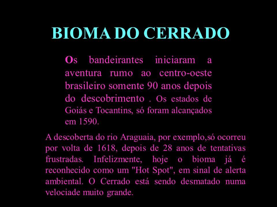 Divisão em 02 continentes BIOMA DO CERRADO Os bandeirantes iniciaram a aventura rumo ao centro-oeste brasileiro somente 90 anos depois do descobriment