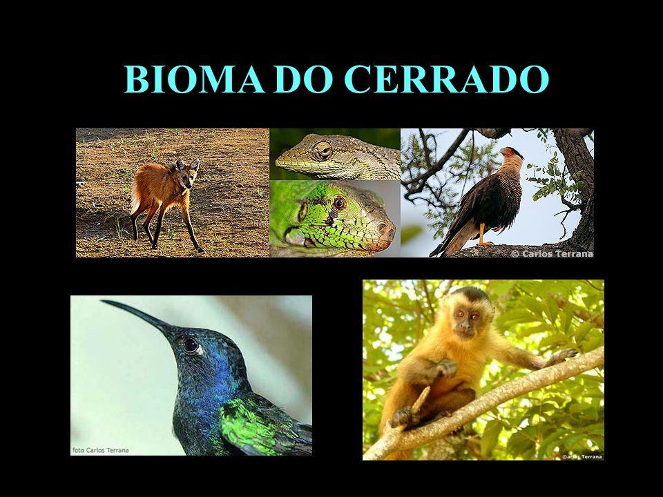 Divisão em 02 continentes BIOMA DO CERRADO