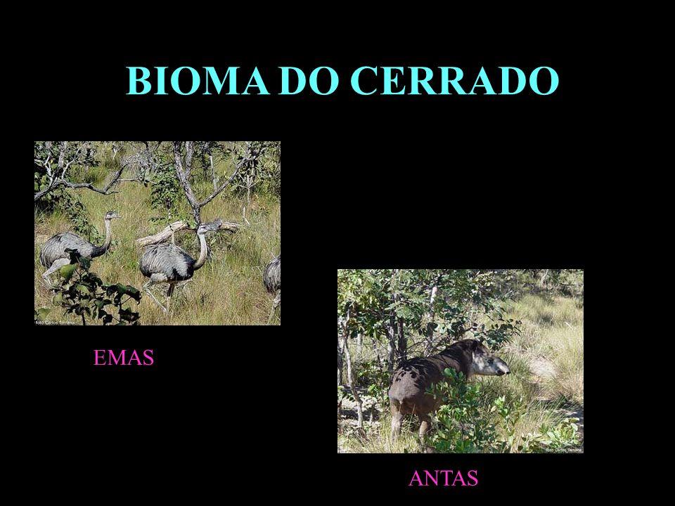 ANTAS BIOMA DO CERRADO EMAS