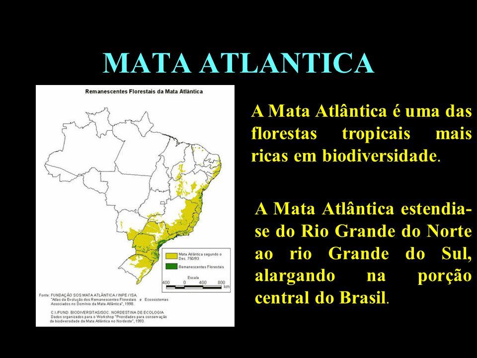 Divisão em 02 continentes MATA ATLANTICA A Mata Atlântica é uma das florestas tropicais mais ricas em biodiversidade. A Mata Atlântica estendia- se do