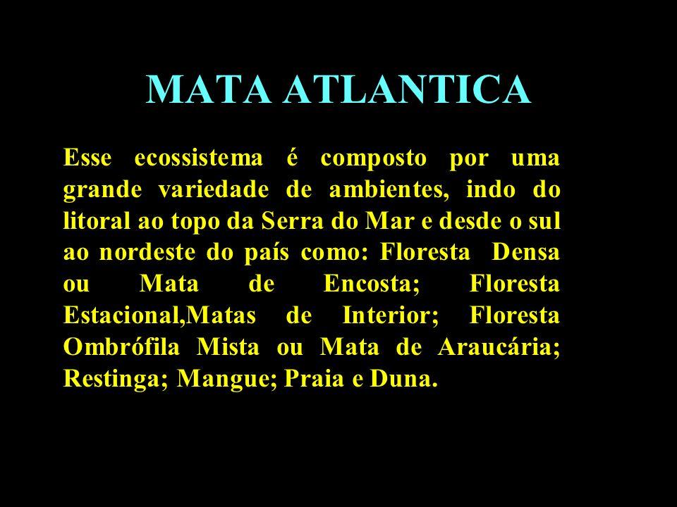 Divisão em 02 continentes MATA ATLANTICA Esse ecossistema é composto por uma grande variedade de ambientes, indo do litoral ao topo da Serra do Mar e