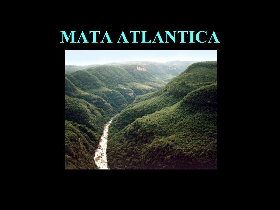 Divisão em 02 continentes MATA ATLANTICA