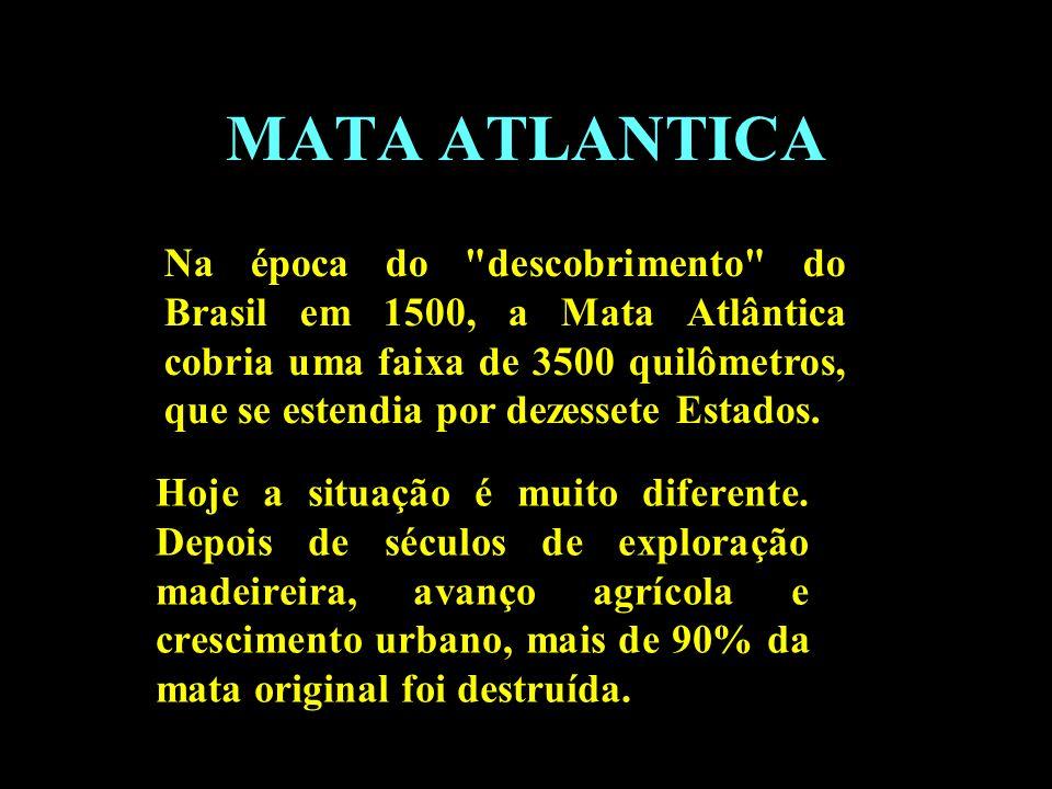 Divisão em 02 continentes MATA ATLANTICA Na época do
