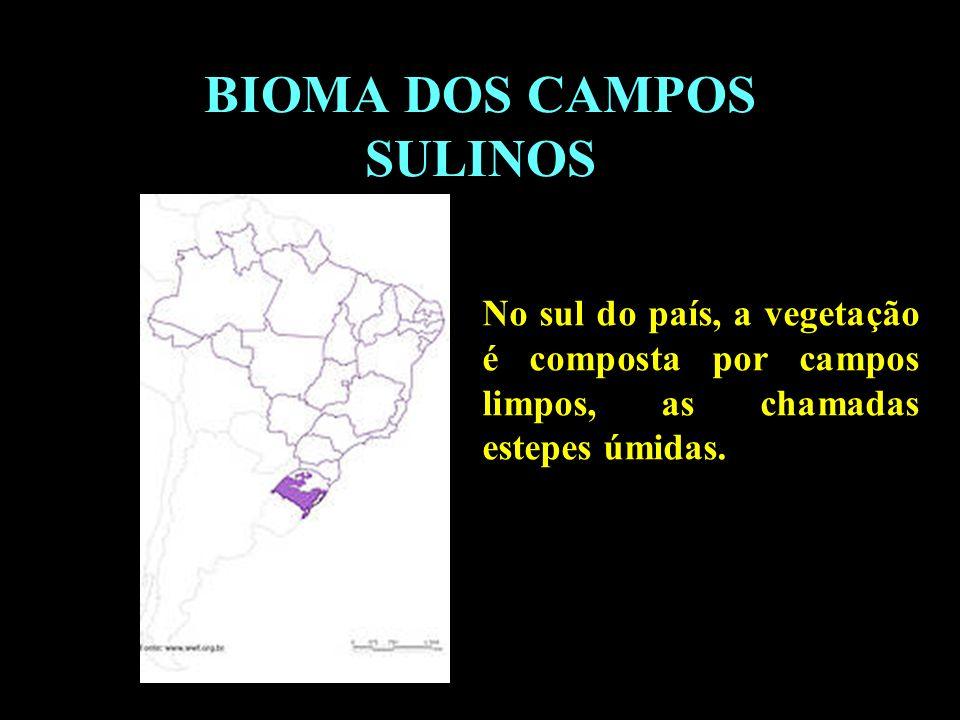 Divisão em 02 continentes BIOMA DOS CAMPOS SULINOS No sul do país, a vegetação é composta por campos limpos, as chamadas estepes úmidas.